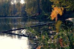 Ett stupat träd i floden Royaltyfri Foto