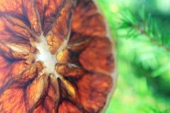 Ett stycke av den torra apelsinen på Xmas-trädet royaltyfria bilder