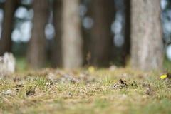 Ett stycke av skogen royaltyfri foto