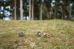 Ett stycke av skogen royaltyfri fotografi
