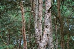 Ett stycke av skogen royaltyfria foton