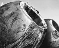 Ett svartvitt av kokosnöten arkivbilder