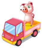 Ett svin i lastbilen Fotografering för Bildbyråer