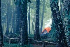Ett tält i den dimmiga skogen Arkivfoton