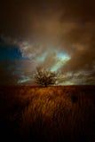 Ett tänt landskap med det lilla trädet Julian Bound Arkivbild