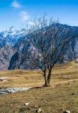 Ett torrt träd Fotografering för Bildbyråer