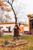 Ett trä maler i parkera Beståndsdel av landskapdesignen av PA Royaltyfri Fotografi