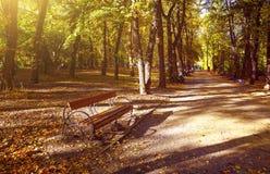 Ett trä parkerar bänk- och gatalyktan under höstträden med gulingsidor som är dolda i stupade sidor, med fotografering för bildbyråer