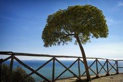 Ett träd royaltyfria bilder