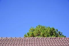 Ett träd bak taket Fotografering för Bildbyråer