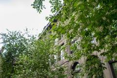 Ett träd fodrade gatan i gamla Montreal royaltyfri fotografi