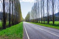 Ett träd fodrade landsvägen nära Marysville, Australien Royaltyfria Bilder