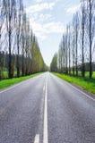 Ett träd fodrade landsvägen nära Marysville, Australien Arkivbilder