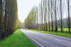 Ett träd fodrade landsvägen nära Marysville, Australien Fotografering för Bildbyråer