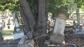 Ett träd har skjutit ifrån varandra två tillbaka till backheadstones arkivfilmer