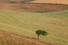 Ett träd i bygden Arkivfoton