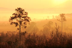 Ett träd i dimman och morgonsolljuset Royaltyfria Bilder
