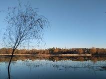 Ett träd i en sjö Arkivbild