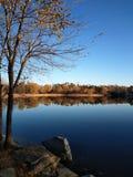 Ett träd i en sjö Royaltyfria Foton