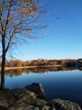 Ett träd i en sjö Fotografering för Bildbyråer