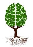 Ett träd i form av en mänsklig hjärna Två halvklot Grön växt för en artikel på kunskap och undervisning Arkivfoto