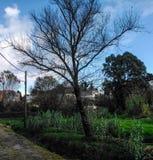 Ett träd i höst Fotografering för Bildbyråer