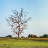 Ett träd i Nara Park Fotografering för Bildbyråer