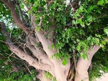 Ett träd i sommaren Royaltyfri Fotografi