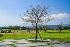 Ett träd i trädgården Royaltyfri Fotografi