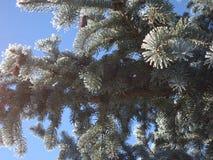 Ett träd i vintermorgonen Fotografering för Bildbyråer