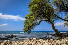 Ett träd lutar över vit korall in mot havet på en briljant bl royaltyfri fotografi