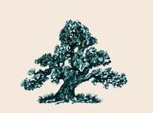 Ett träd med att breda ut sig filialer Teckning Arkivbild