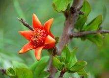 Ett träd med den orange blomningen royaltyfri bild
