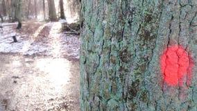 Ett träd med en röd prick på den arkivbild