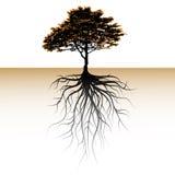Ett träd med ett synligt rotar. Utrymme för en text stock illustrationer