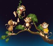 Ett träd med fyra skämtsamma apor Arkivfoton