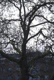 Ett träd med inga sidor i London, konstnärliga England Royaltyfri Foto
