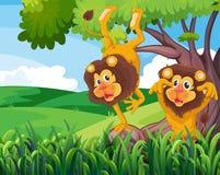 Ett träd med två skämtsamma lejon Royaltyfri Bild