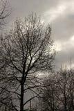 Ett träd mot en mörk himmel Arkivbilder