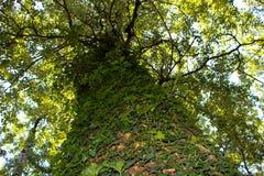 Ett träd mycket av lövverk 2 Arkivfoto