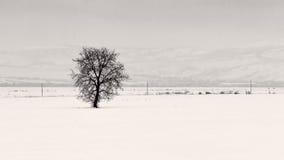 Ett träd nära krökning Carpathians Royaltyfri Foto