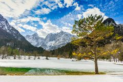 Ett träd och en liten sjö i Julian Alps arkivbild
