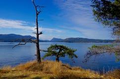 Ett träd och ett hinder på en guld- gräs täckt rättfram förbise salt vårö Arkivfoton