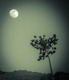 Ett träd och månen Arkivbild