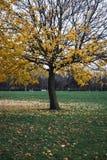 Ett träd och stupade sidor på gräset Arkivfoton