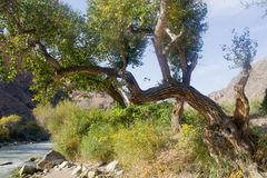 Ett träd ovanför en stormig bergflod royaltyfria foton