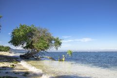 Ett träd på den härliga stranden arkivbilder