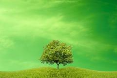 Ett träd på en äng under en fantastisk grön himmel royaltyfria bilder