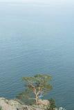 Ett träd på en klippa Royaltyfri Foto