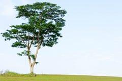 Ett träd på en kulle Royaltyfri Foto